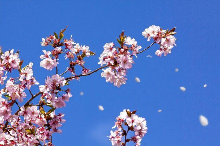 RITUALE RIGENERANTE: WEEKEND 25 APRILE E 1° MAGGIO Hotel Garden Terme